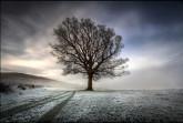 treephotos44