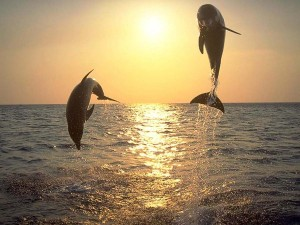 Dolphins_by_Jill2728